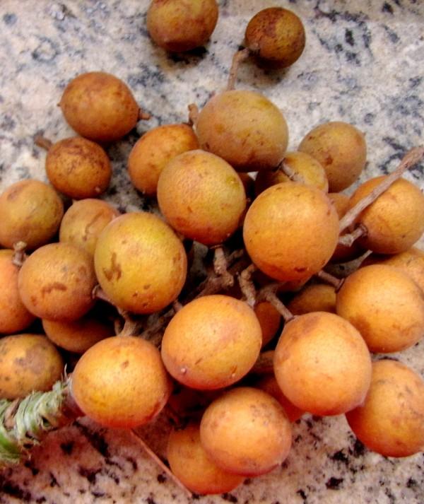 Fruto típico do Nordeste, pitomba impressiona quem vem de fora
